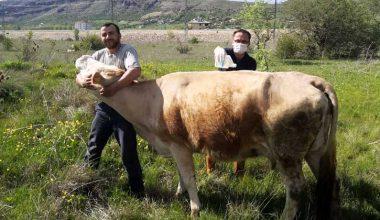 Keneye karşı 51 bin büyükbaş hayvan ilaçlandı