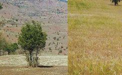 Şebinkarahisar, Alucra, Çamoluk kuraklık kapsamına alındı